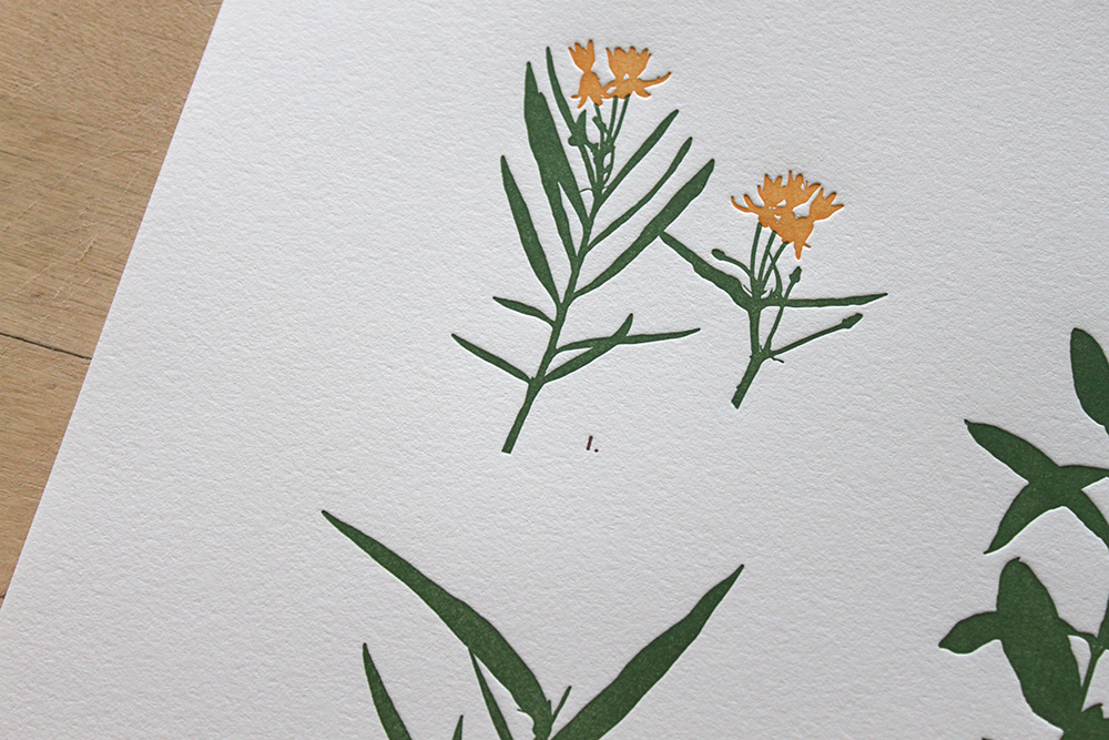 milkweed-2.jpg