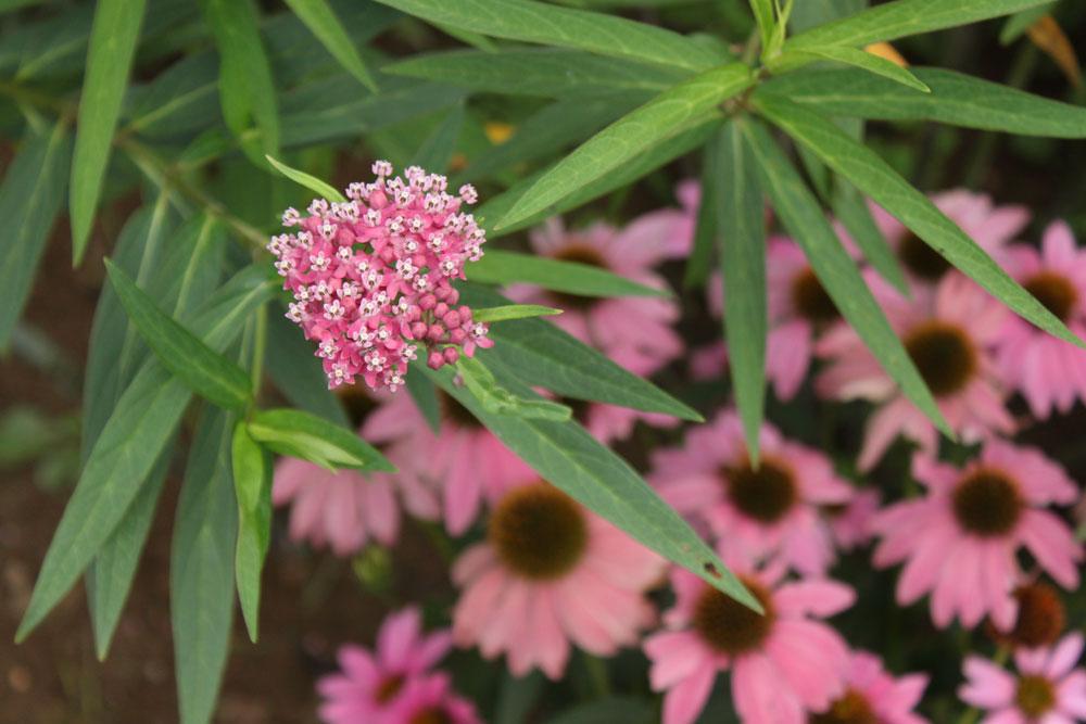 moontree-milkweed-coneflower-letterpress.jpg