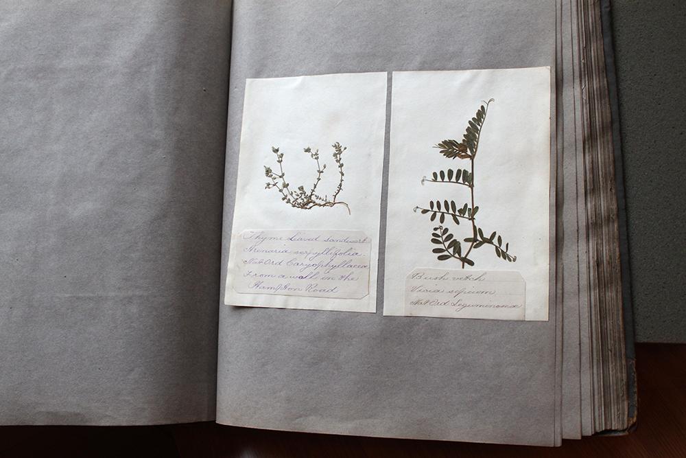 Moontree Letterpress Yale CBA 5.jpg