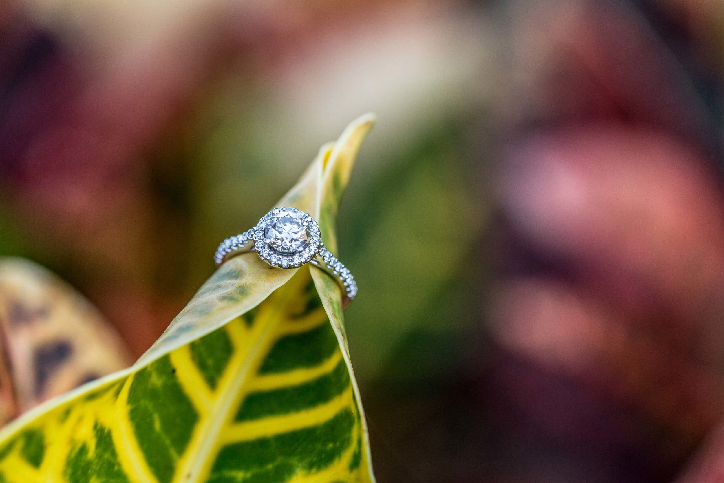 Tracy-Rodriguez-Photography-Blog-Engagement-5037.jpg