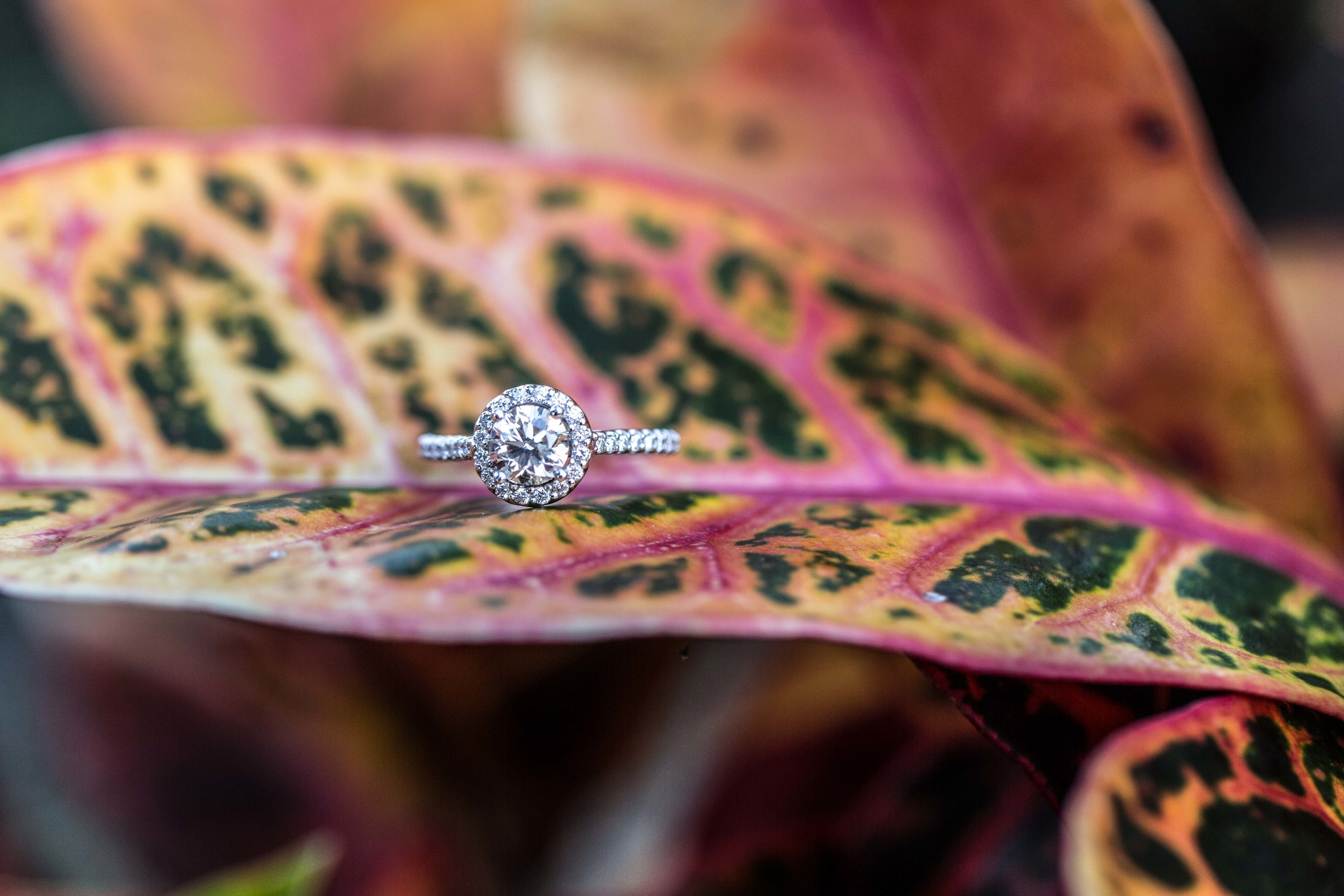 Tracy-Rodriguez-Photography-Blog-Engagement-5039.jpg