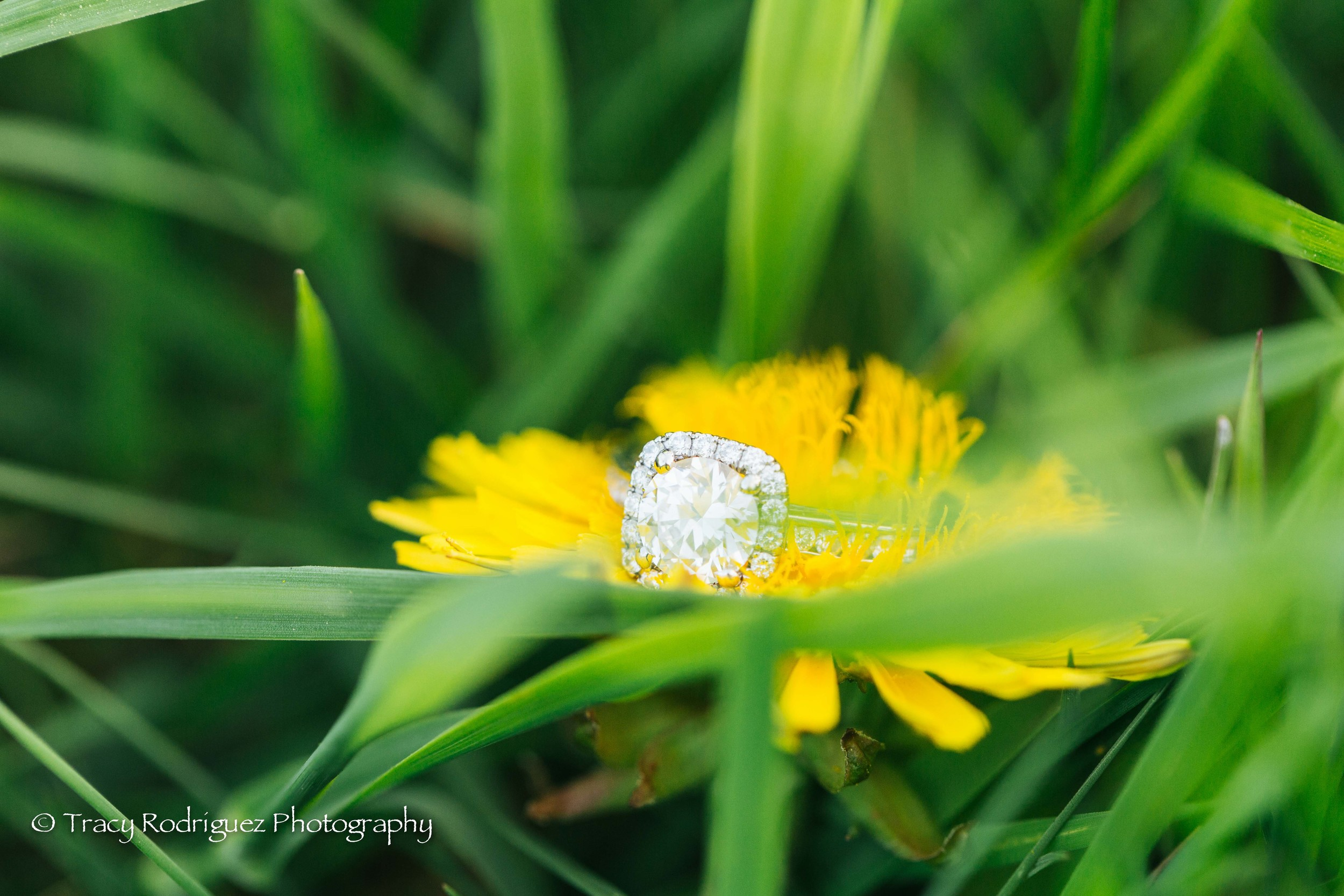 TracyRodriguezPhotography-LowRes-78.jpg