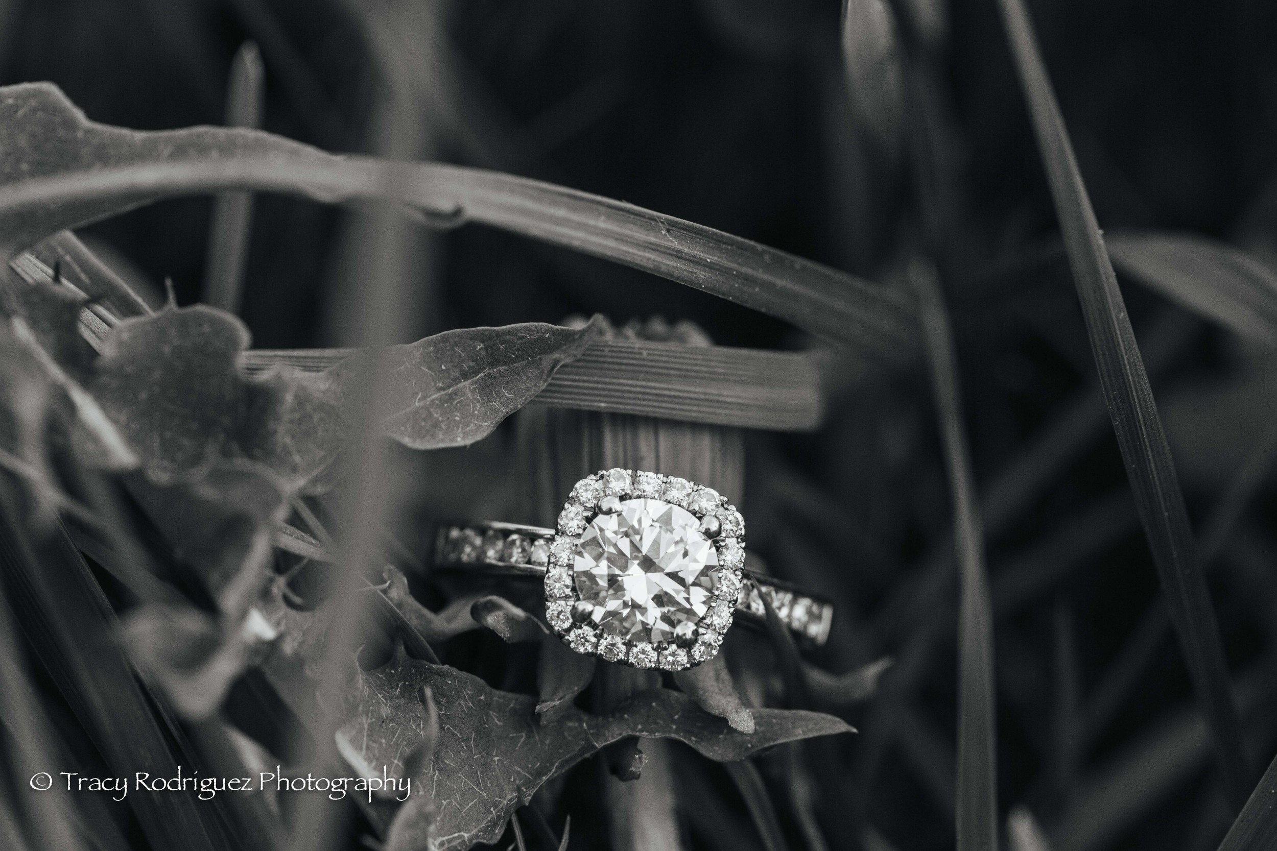 TracyRodriguezPhotography-LowRes-80.jpg