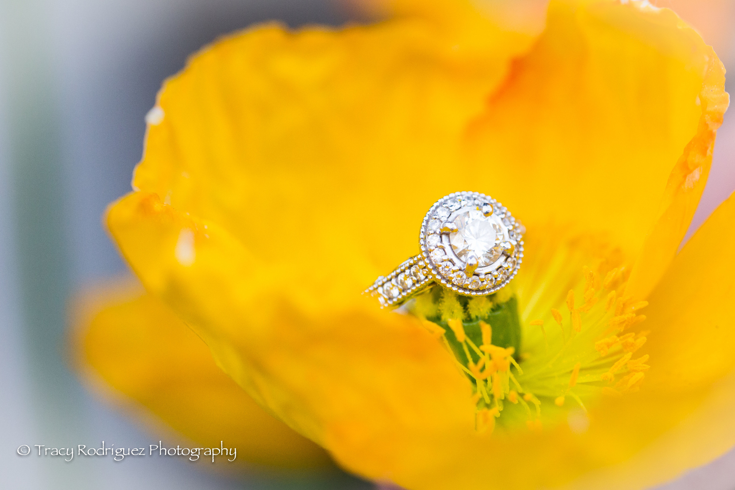 TracyRodriguezPhotography-Engagement-LowRes-91.jpg