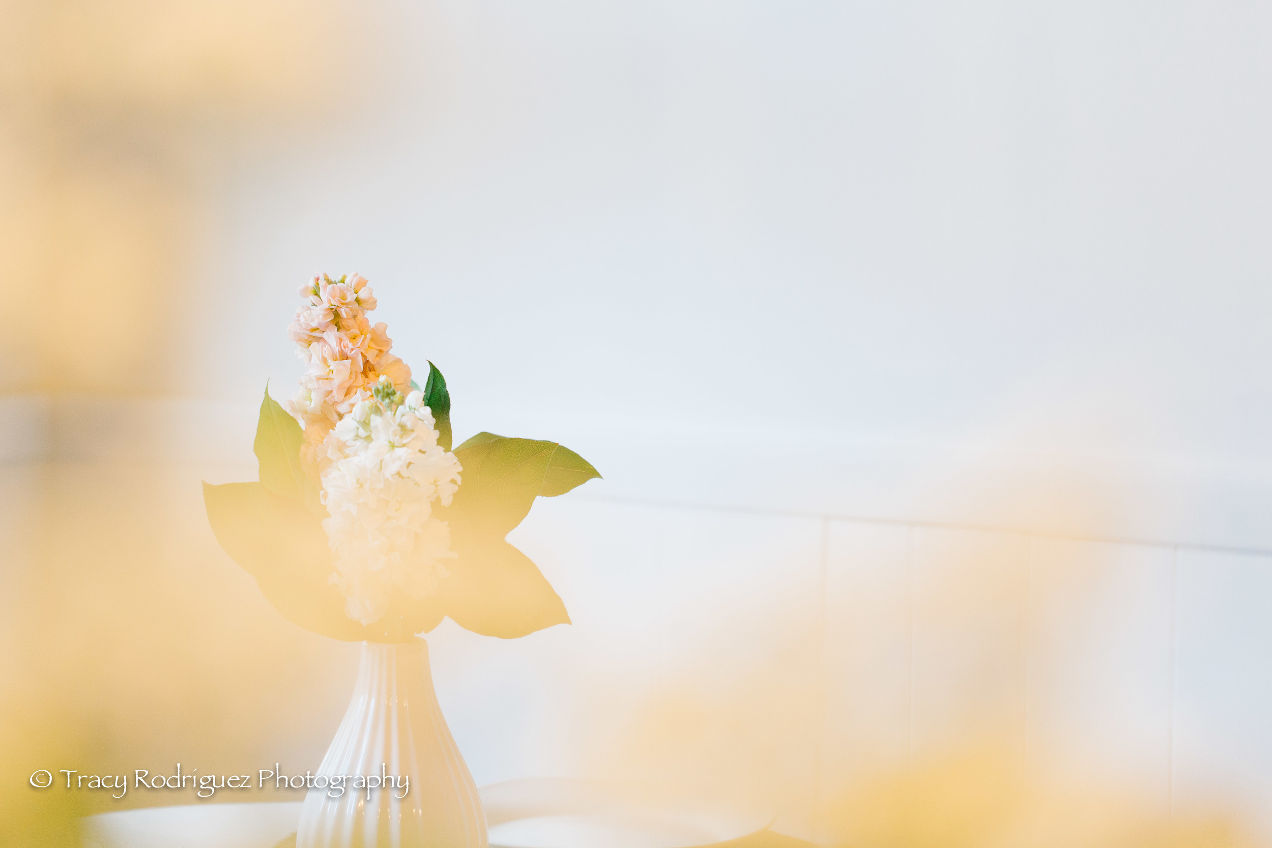 TracyRodriguezPhotography-LowRes-2.jpg