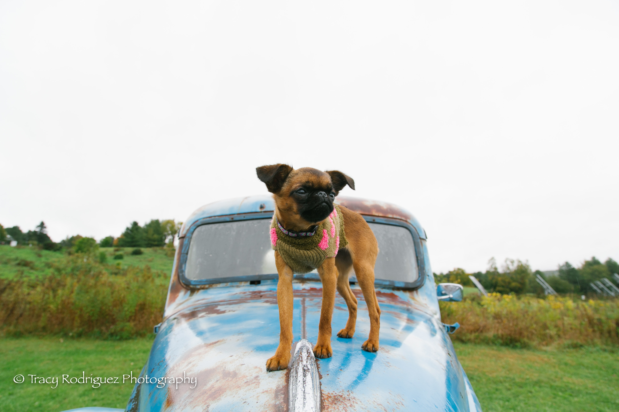 TracyRodriguezPhotography-39.jpg