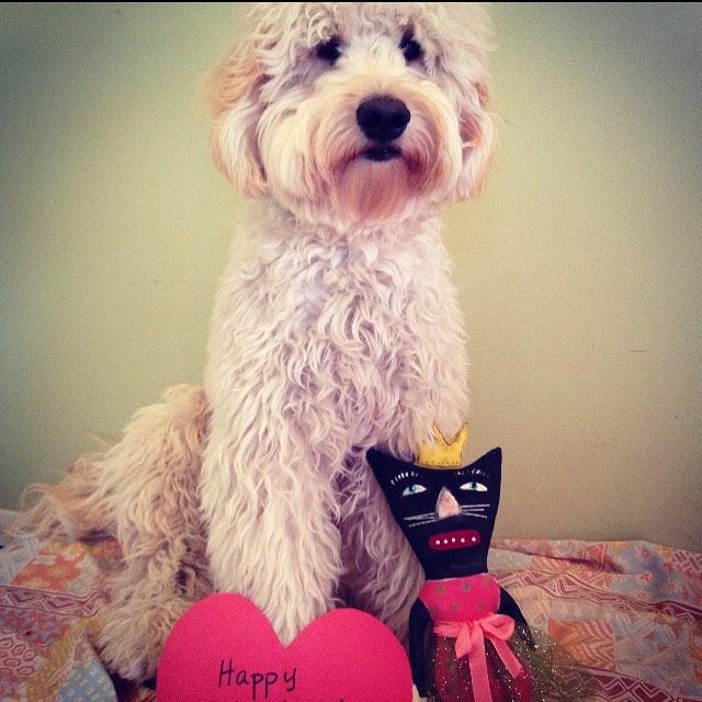 Happy Valentime's!! -Lefty #eastsidedogwalkers #valentinesday #puppylove #trueluff #lefty #austintexas