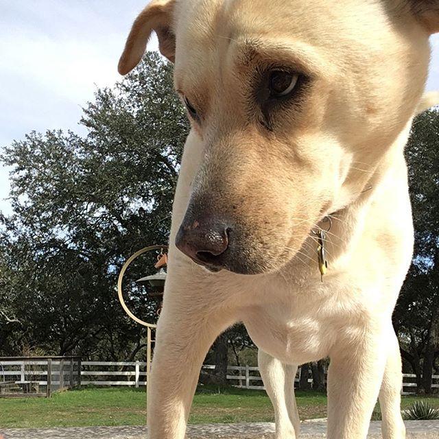 p cute stalker we have.  #eastsidedogwalkers #poncedeleon #drippingsprings #mostlychillin #texasisthereason