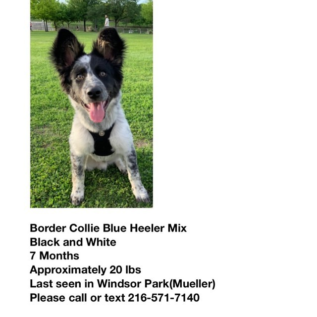 We just got word of a lost pup in the hood...Please keep an eye open for this missing beast!! #eastsidedogwalkers #lostdog