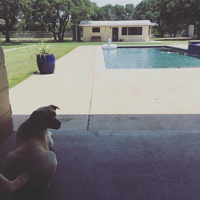 dog days. #eastsidedogwalkers #ranchpup #texasisthereason #poncedeleon #dogwalkers #drippingsprings #beastside