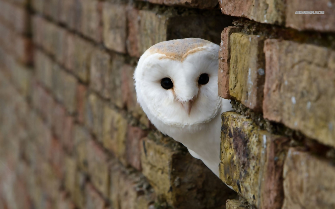cute-owl-pictures-download.jpg