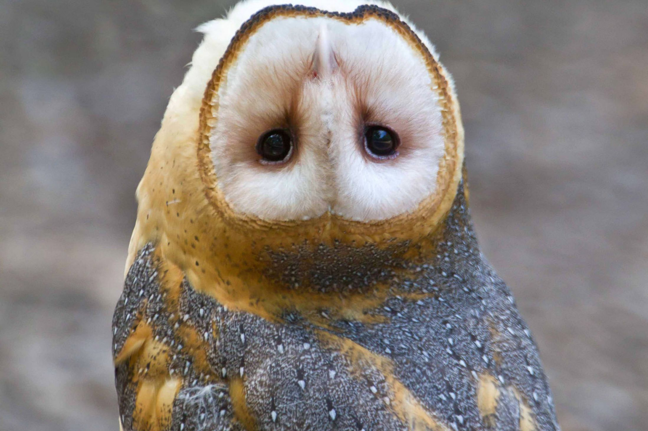 £££-Owl-with-an-upside-down-head.jpg