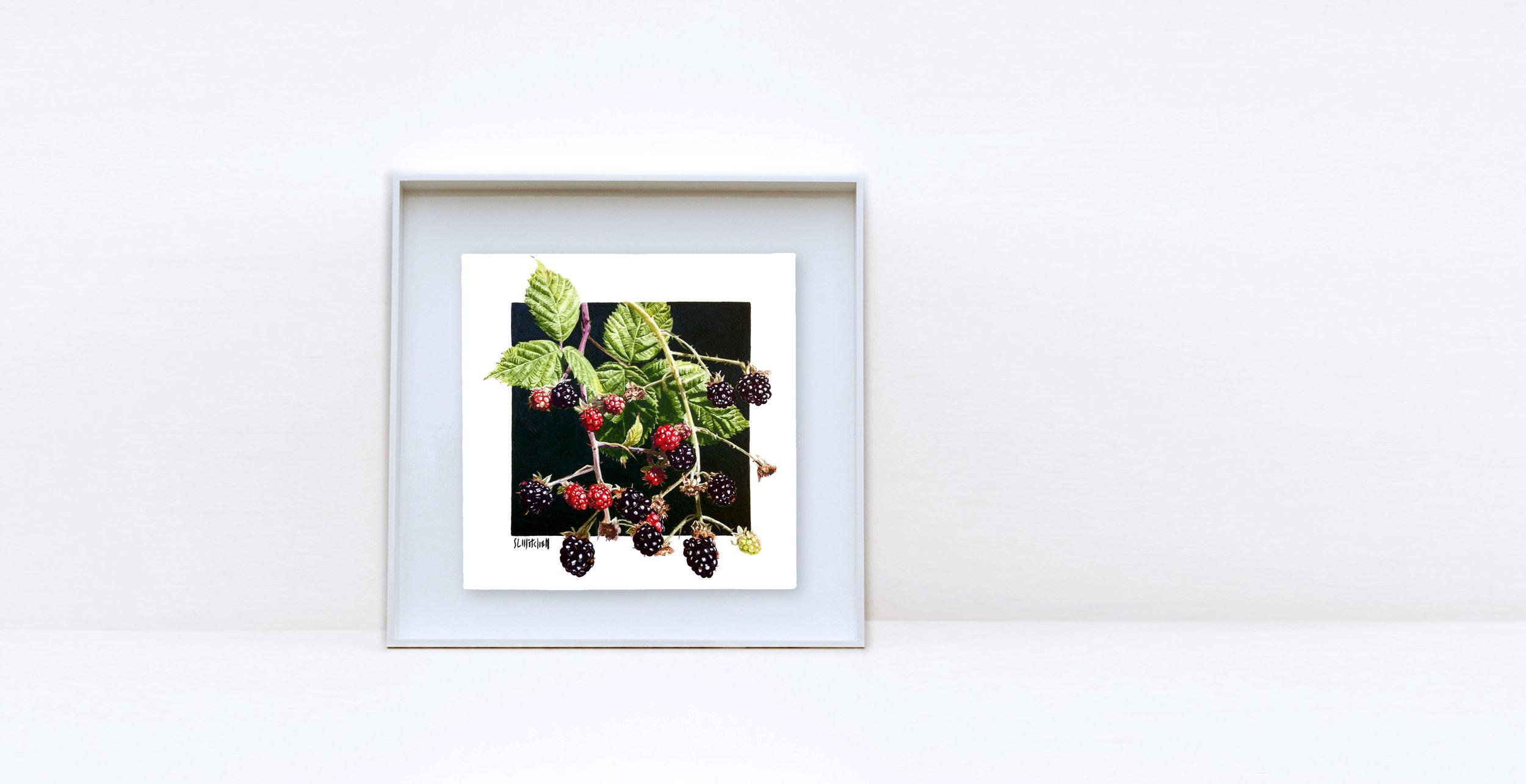 4x4_Blackberries.jpg