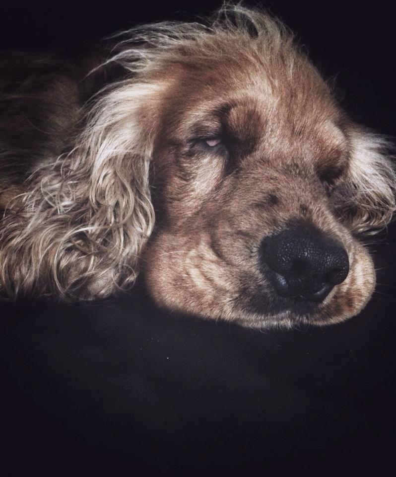 bert sleeping.jpg