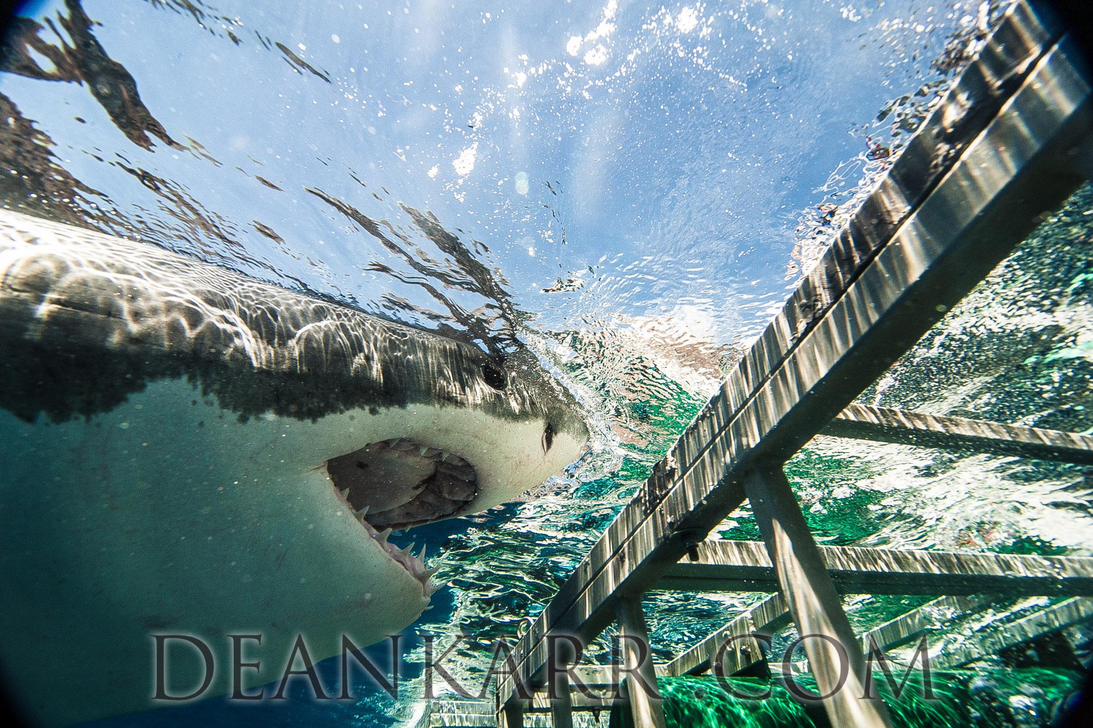 SHARKS 2016-311.jpg