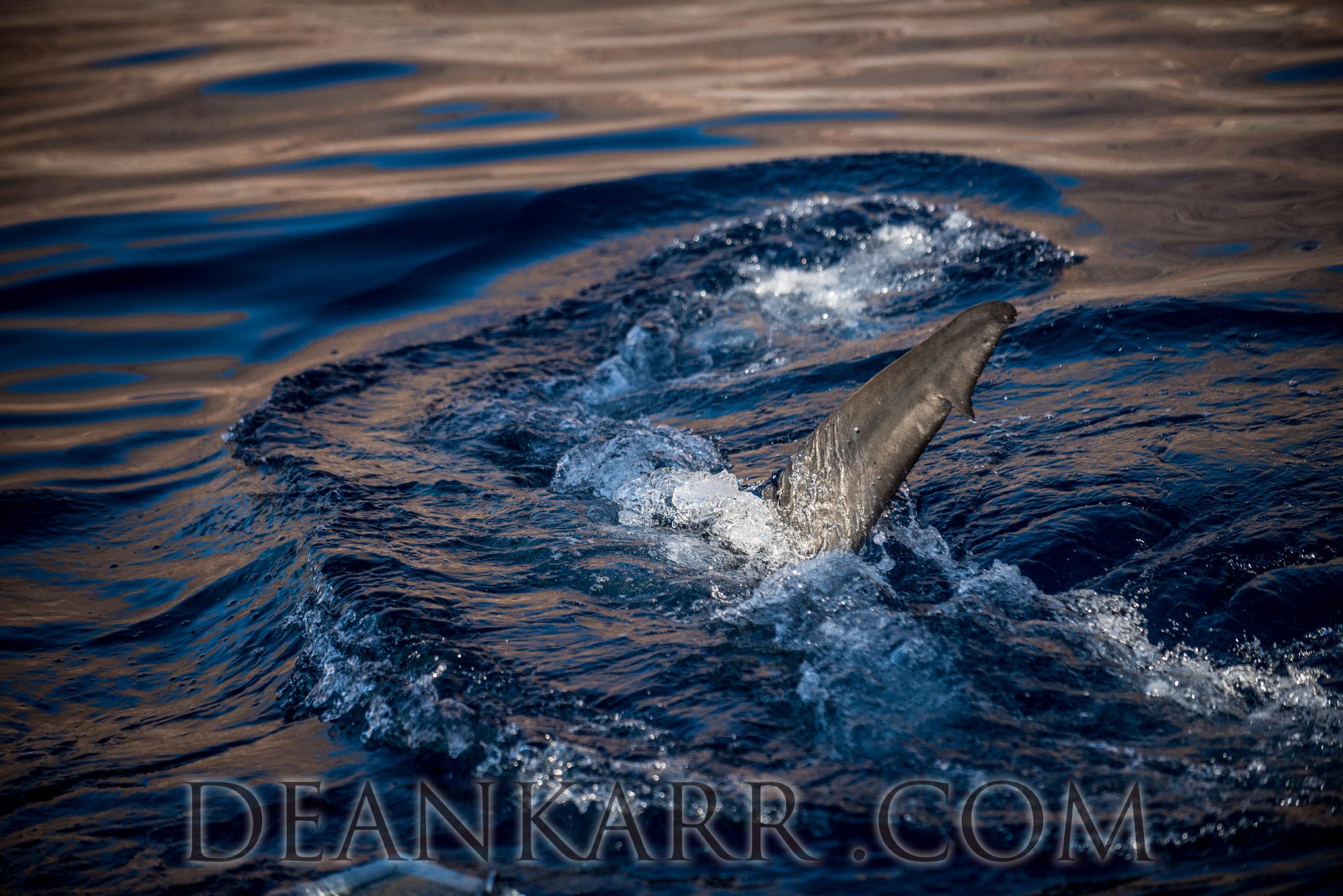 SHARKS 2016-971.jpg
