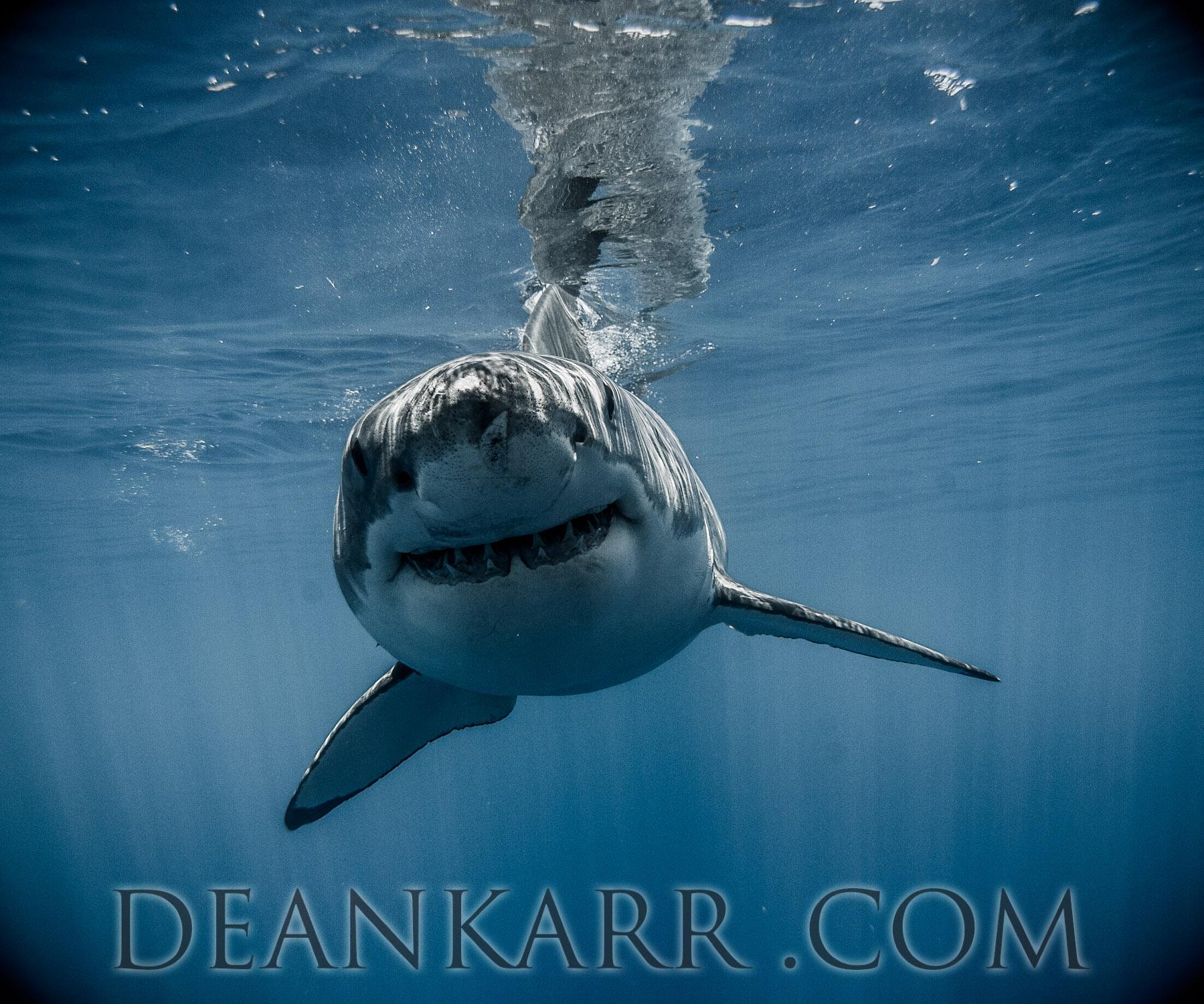 SHARKS 2016-1501.jpg
