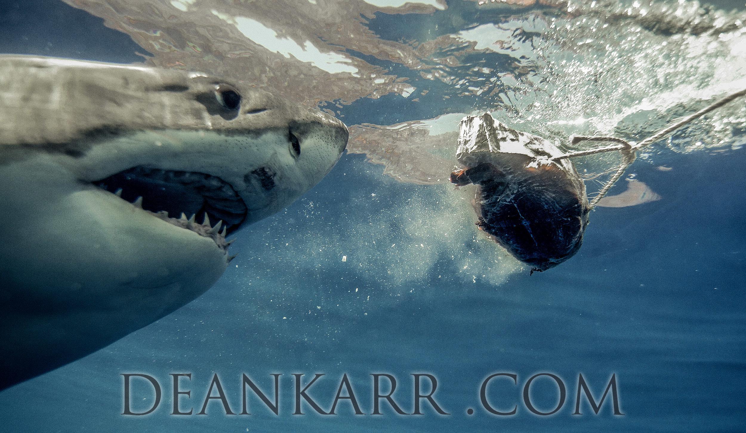 SHARKS 2016-1631.jpg