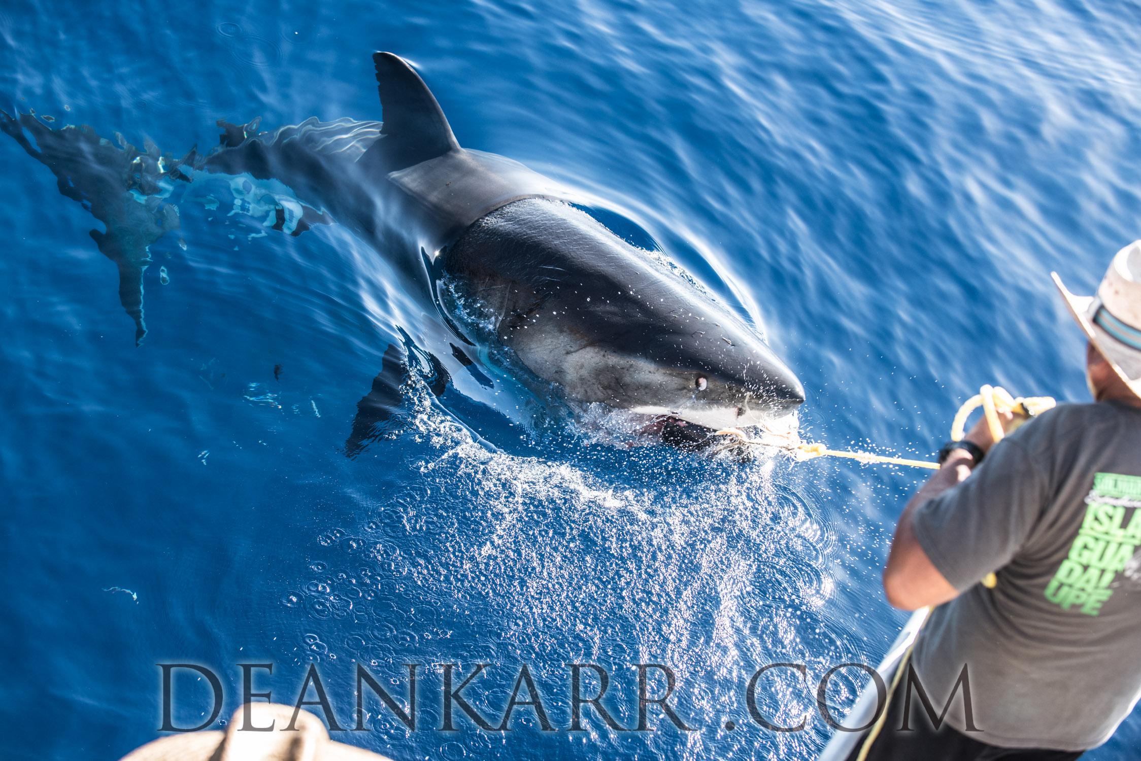 SHARKS 2016-2154.jpg