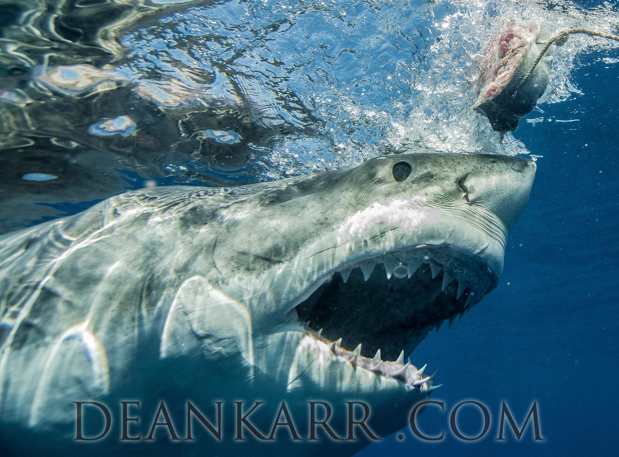 SHARKS 2016-2517.jpg