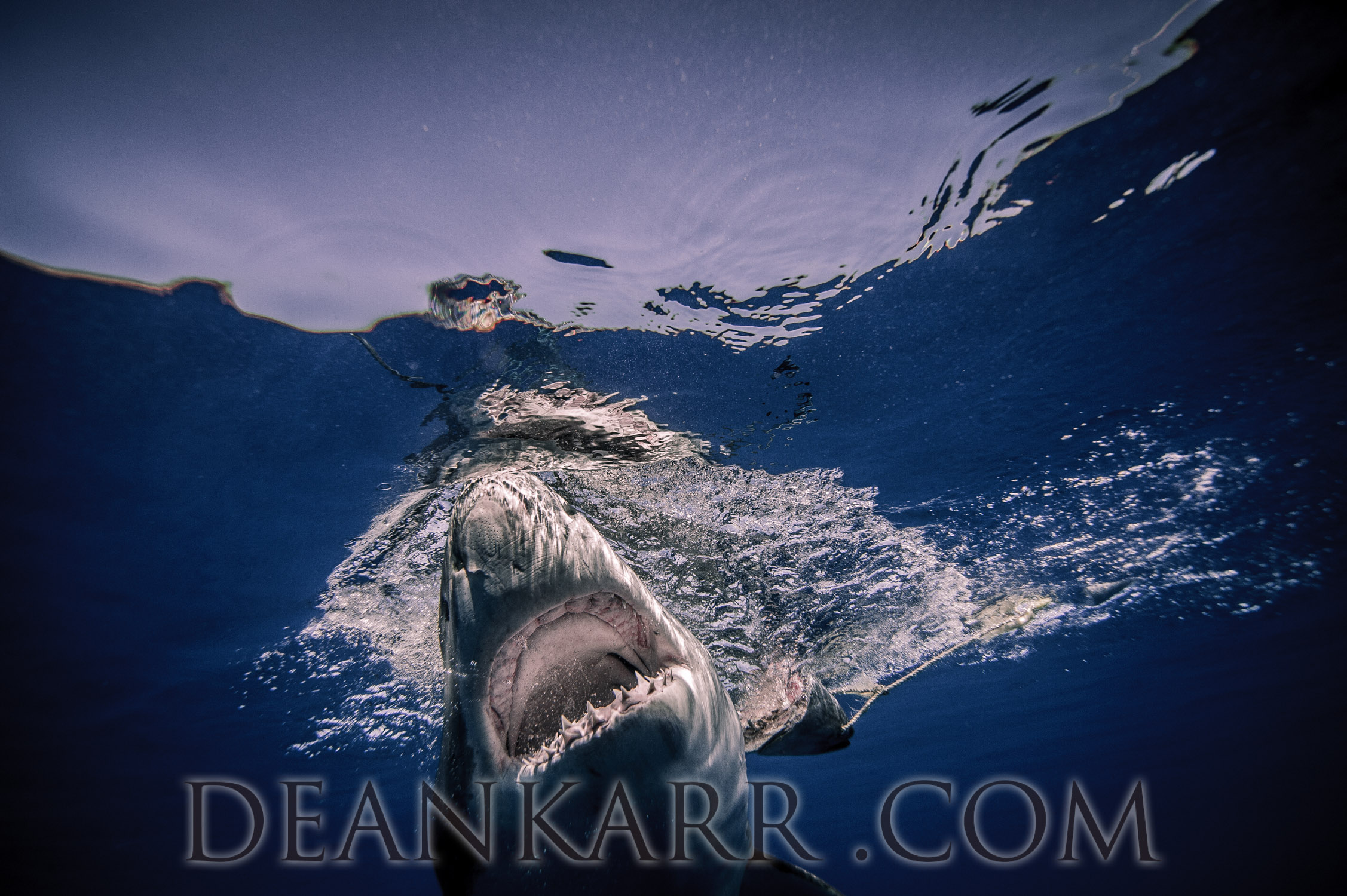 SHARKS 2016-2533.jpg