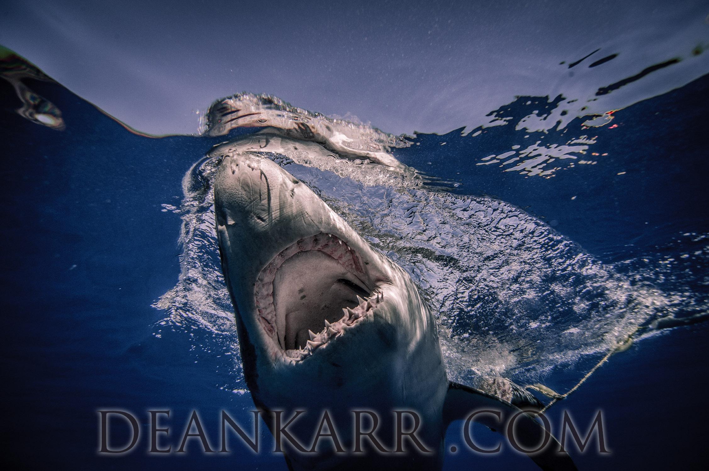 SHARKS 2016-2534.jpg