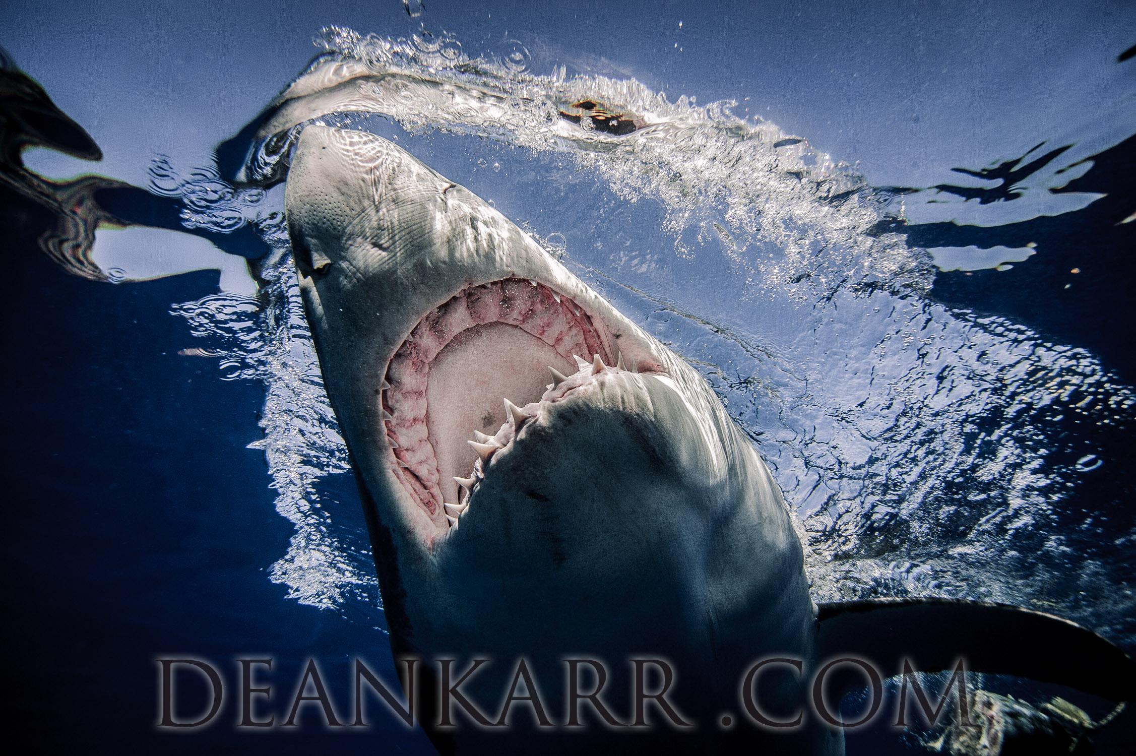 SHARKS 2016-2535.jpg