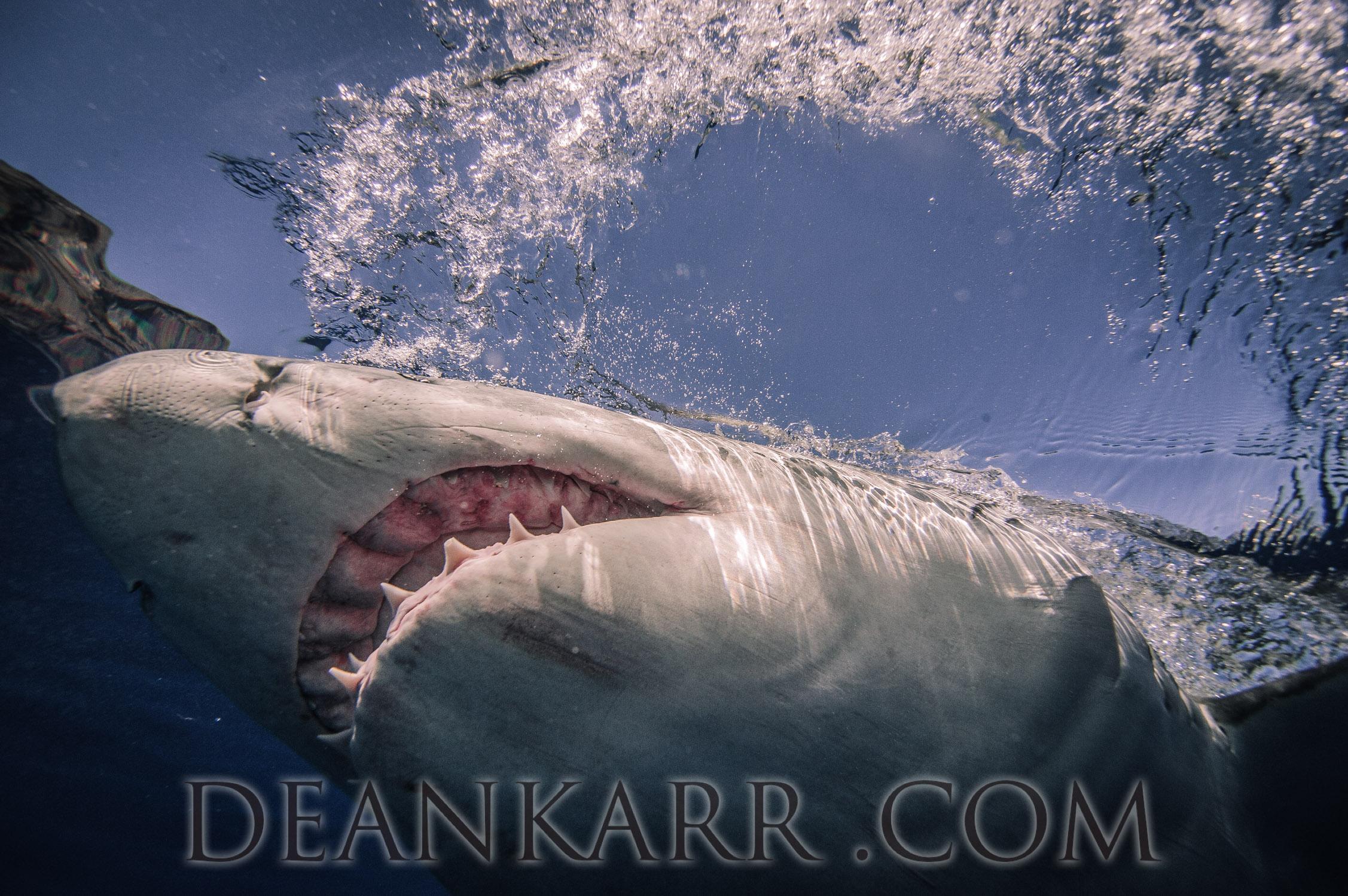 SHARKS 2016-2536.jpg