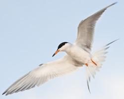 For_Tern221035-SMALL.jpg