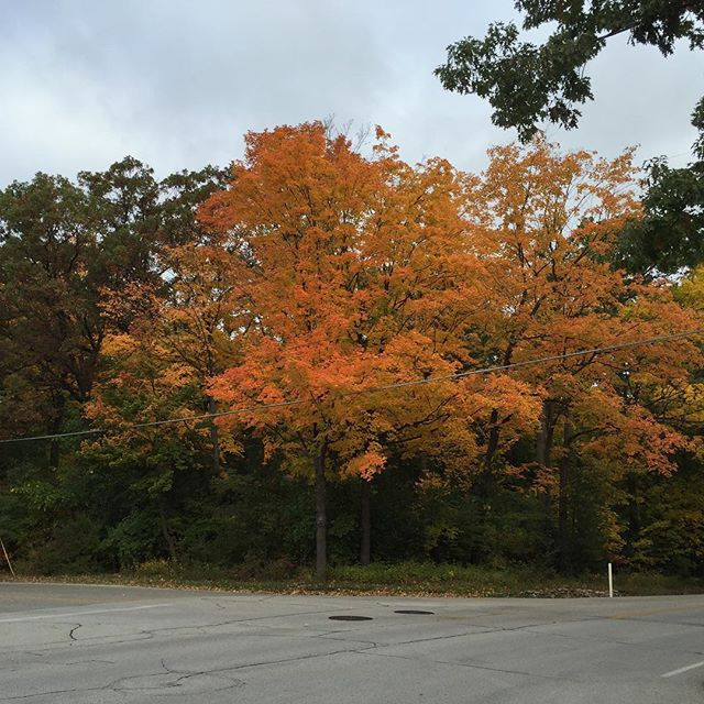 I pass by these trees every day. They always turn a beautiful orange this time of year, but photos never do them justice