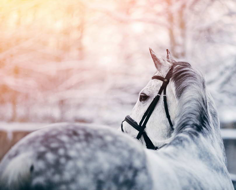 12 Top Winter Care Tips For You And Your Horse