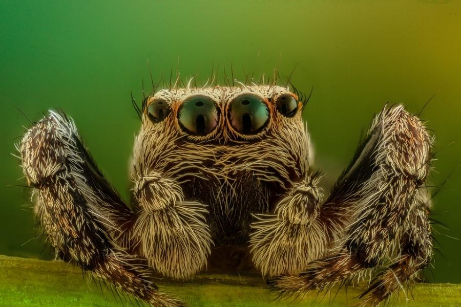 spider-2313079_960_720.jpg