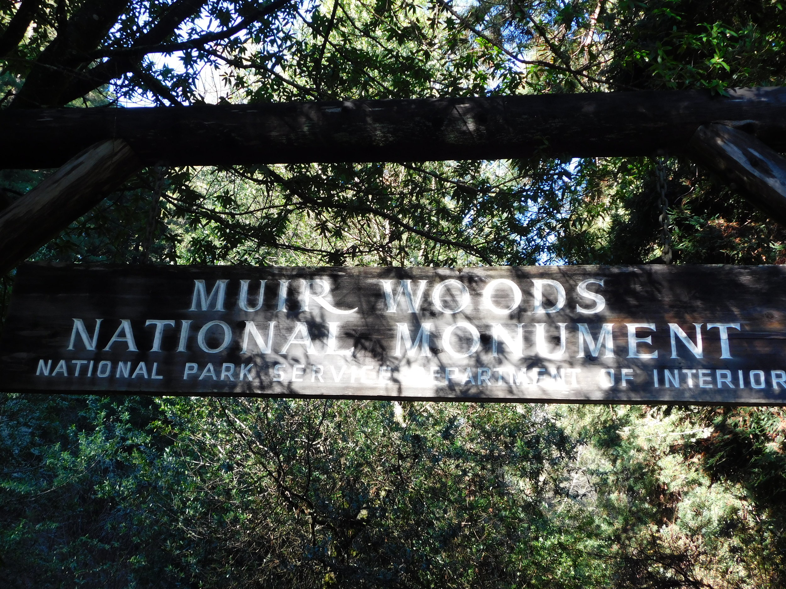 Visiting the Redwood tree park