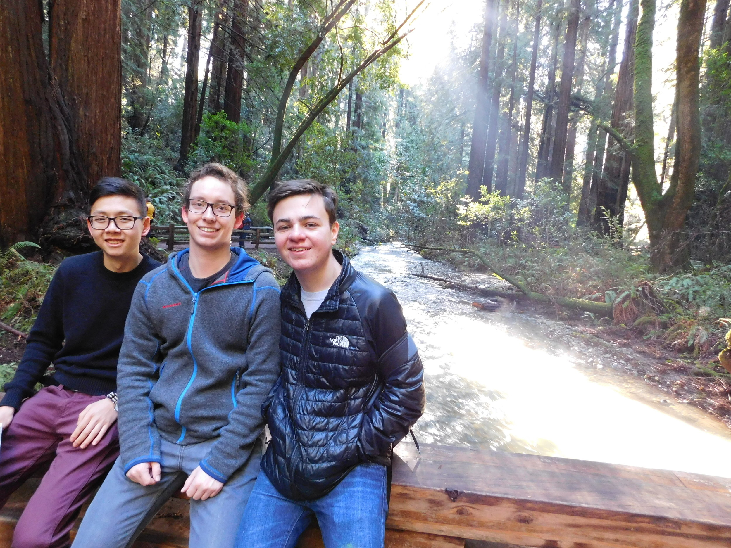 Cats at Muir Woods