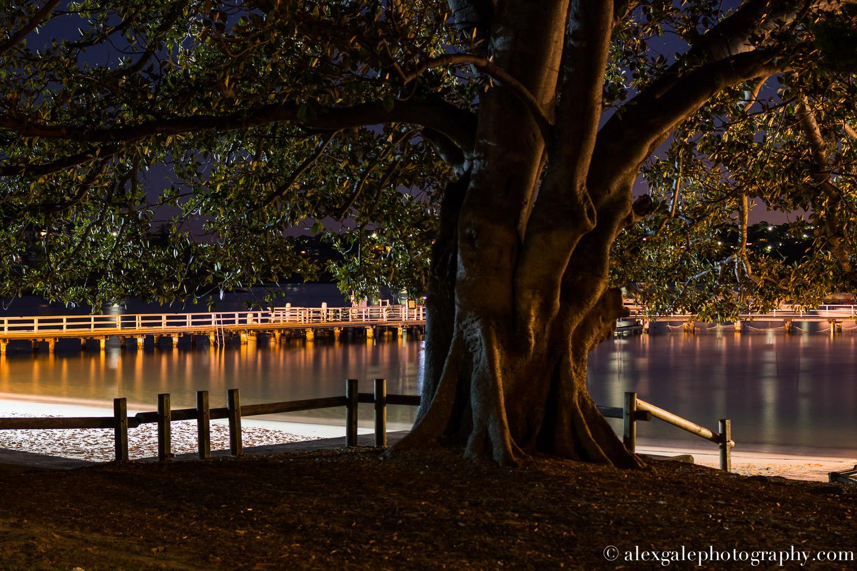 Balmoral Fig Tree