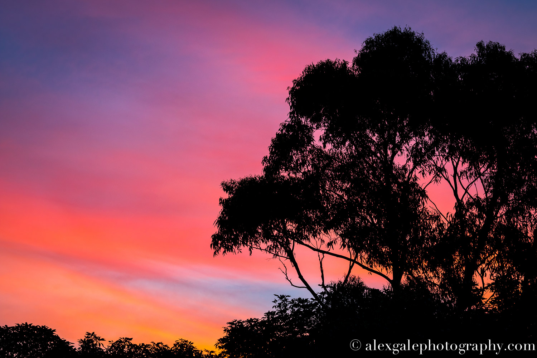 Tree Sunset.jpg