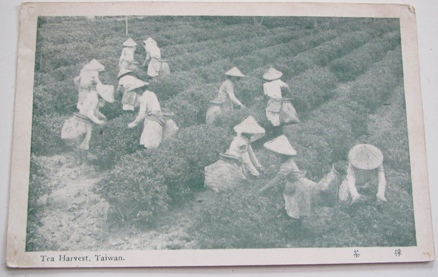 Tea picking ladies wearing big bamboo hats and bamboo baskets.