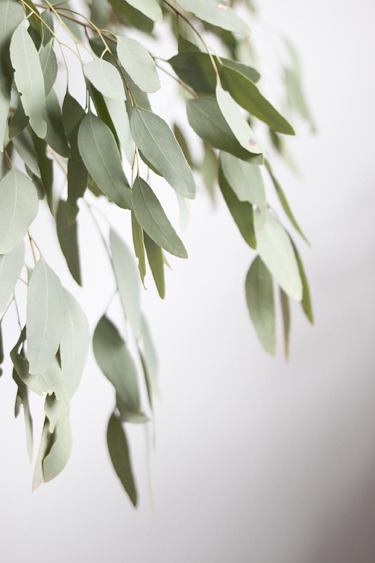 Madeline Young - Eucalyptus