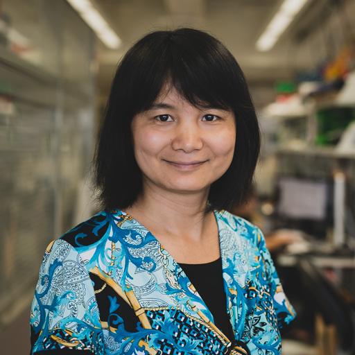 Bin Wang, MS bwang [at] path.wustl.edu