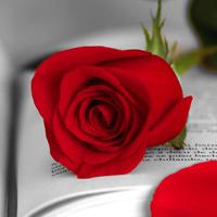 visual-sant-jordi-roses-books