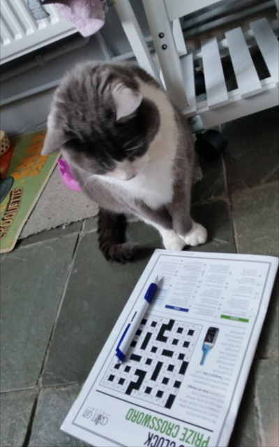 Members really got stuck in to April's crossword. Pic: Jenny Hutchinson