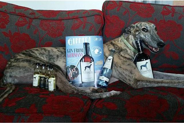 windspiel gin box magazine dog