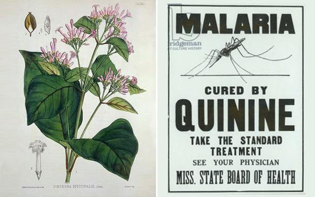 Malaria quinine
