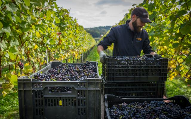 Hattingley Valley english sparkling wine vineyard energy efficient