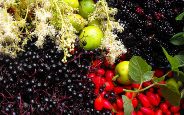 County Wicklow botanicals apples flowers berries and blackberries