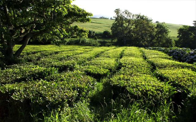 Ireland Drumshanbo Fields of green