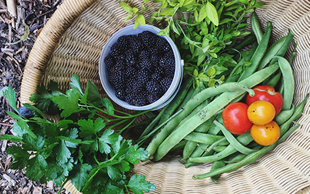 Basket containing fruit and vegetables blackberries tomatos and herbs