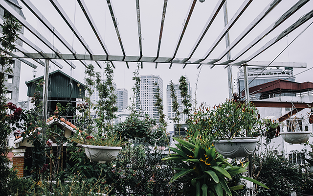 City garden with plants and hanging baskets