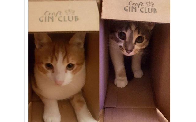 kittens+craft+gin+boxes.png