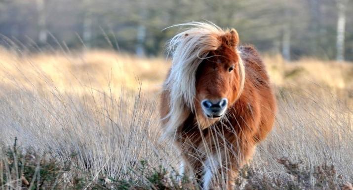 pony boi.jpg
